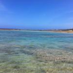 折り返し地点の大度浜海岸で・・・